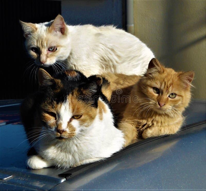 The calm look of the feline stock photos