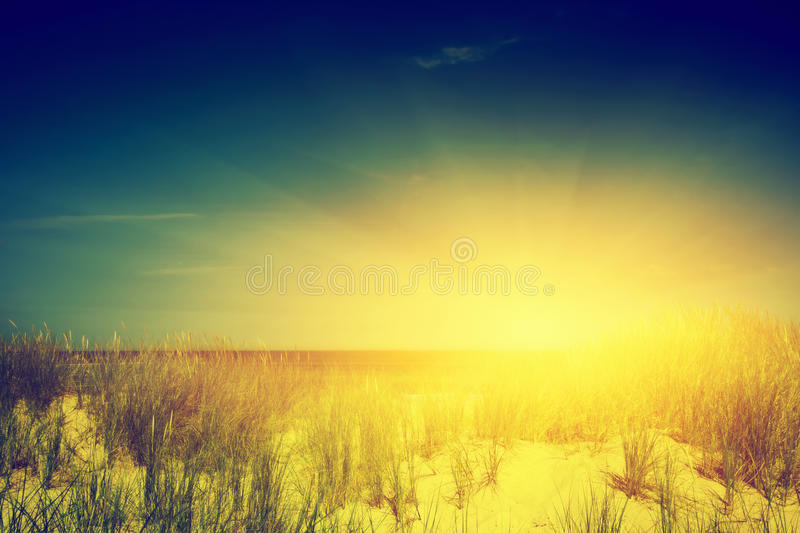 Calm ocean and sunny beach with dunes and green grass stock image