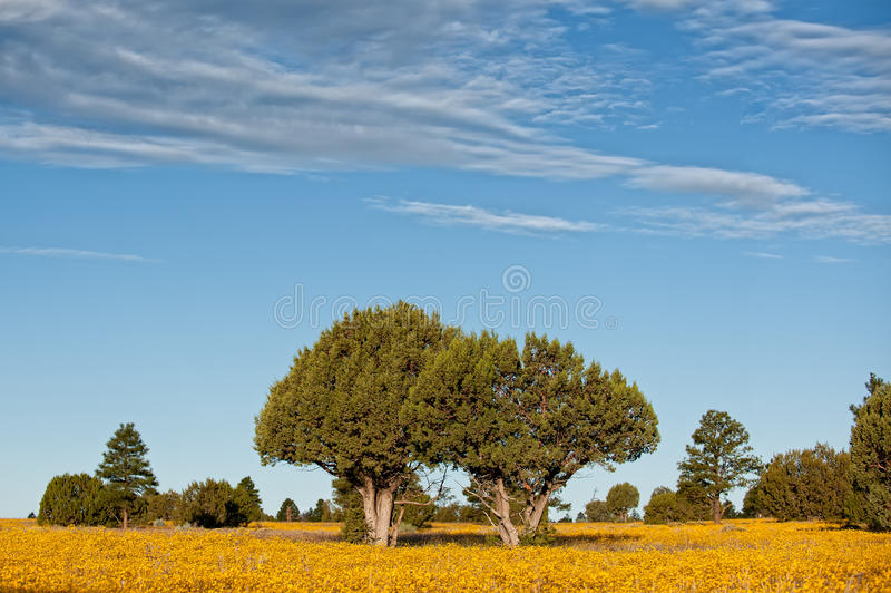 Download Calm Pasture stock image. Image of tree, pasture, remote - 31490319
