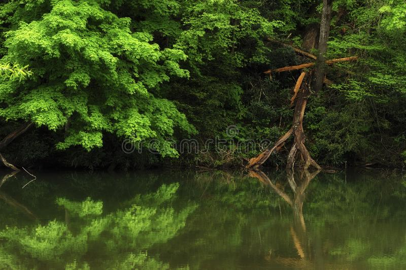 Calm reflecting waters in the Appalachian Mountains. Lush spring greens and a fallen dead tree reflect in the calm waters of a river in the Appalachian Mountains stock photo