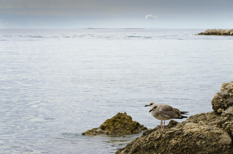 Download Calm sea stock image. Image of tranquil, serene, destination - 26500253