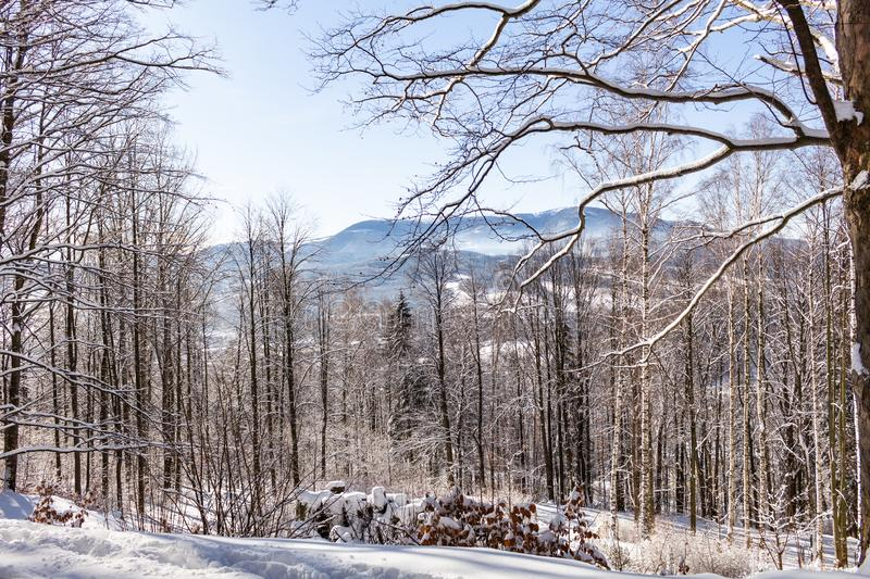 A calm snowy winter morning landscape with a colorful background, snow covered trees and a road heading down a hill stock images