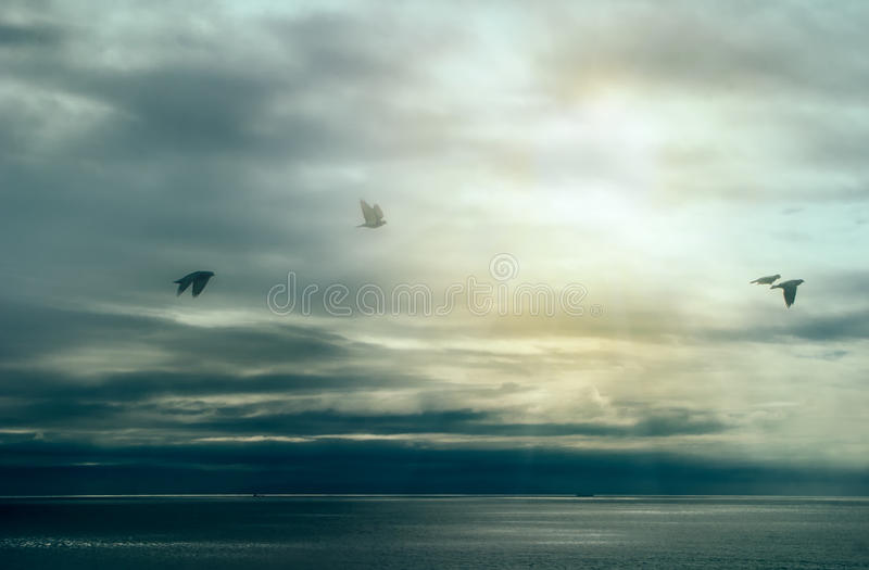 Calm After Storm. Birds Flying over Ocean with Storm Clouds. Wild Nature Landscape stock images