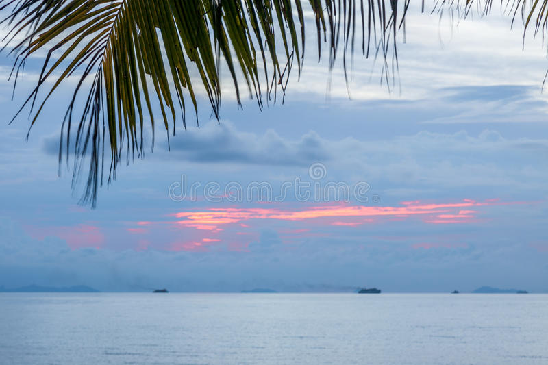 Calm tropical sunset on a background of palm tree. royalty free stock photos