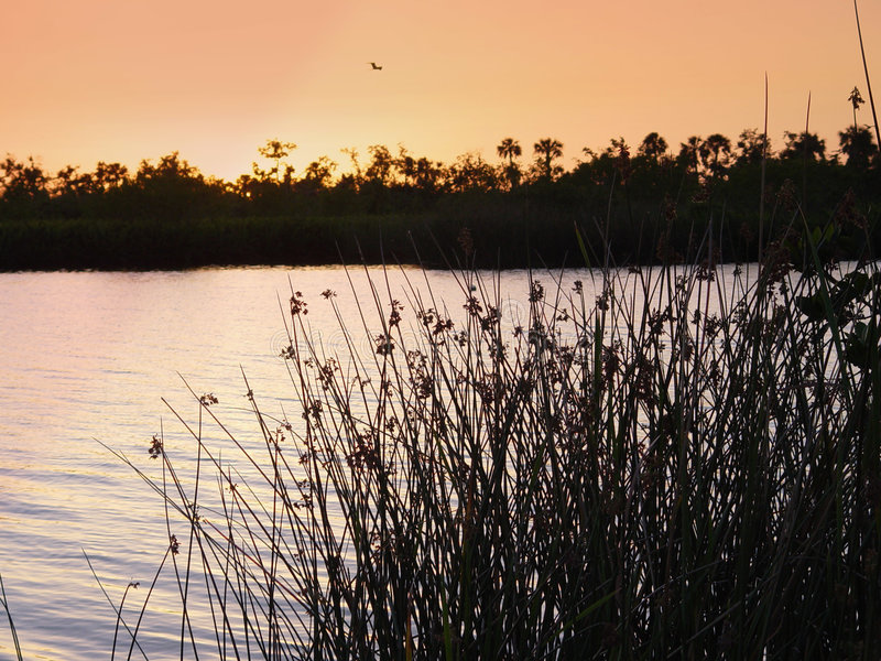 Calm water. On the peace river around dusk in Florida royalty free stock photography