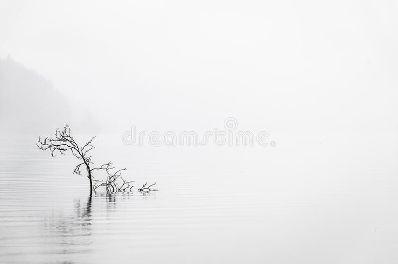 Calm Water. In the early morning fog stock photos