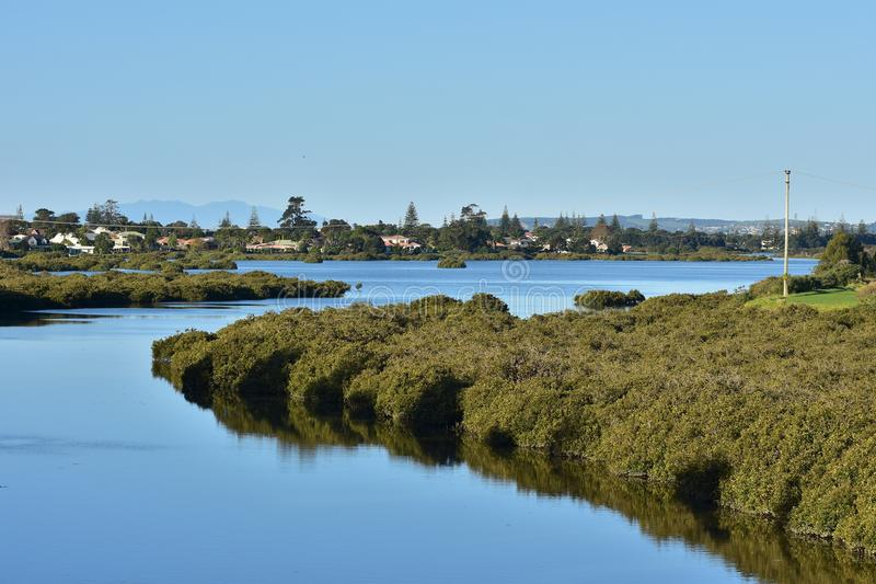 Calm waters of estuary. Calm waters with growth of mangroves in estuary in Orewa royalty free stock images