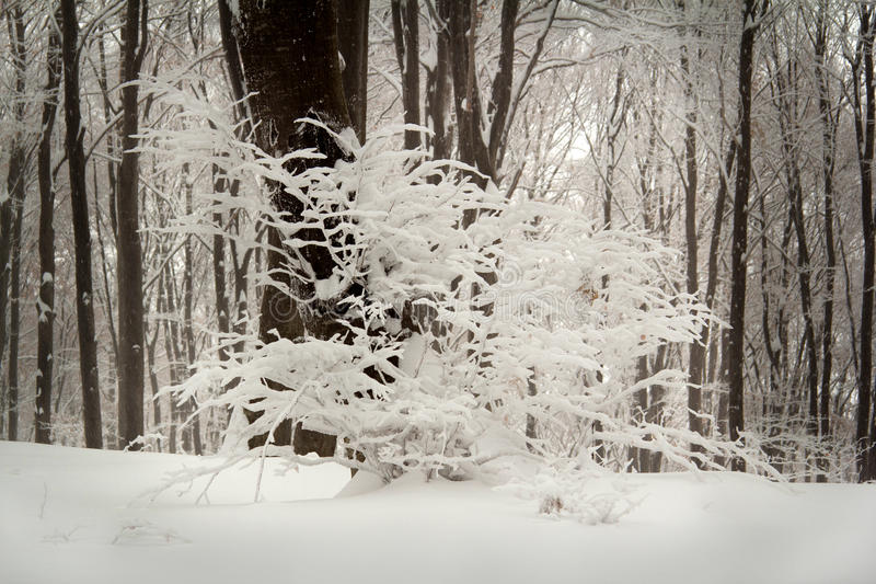 Calm winter day in the forest stock image