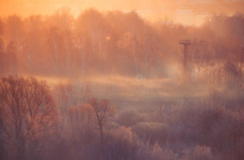Calm winter morning in the forest with fog and sunbeams. Beautiful calm winter morning in the forest with fog and sunbeams. No people royalty free stock images