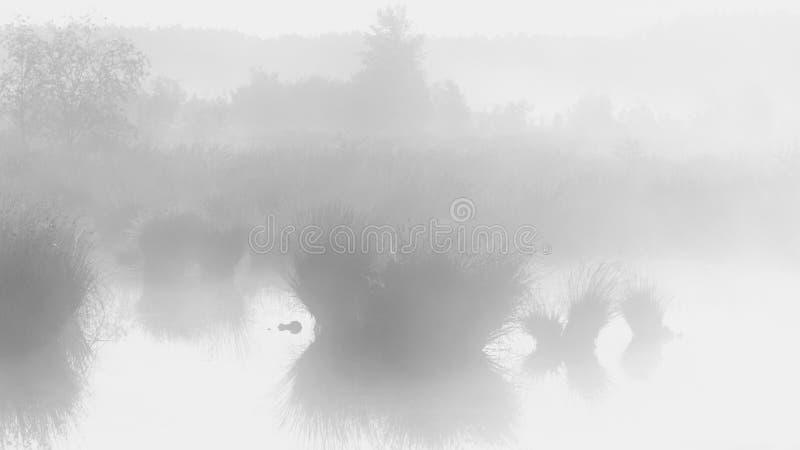 Calma e grande por do sol enevoado sobre o pântano ou o brejo imagem de stock