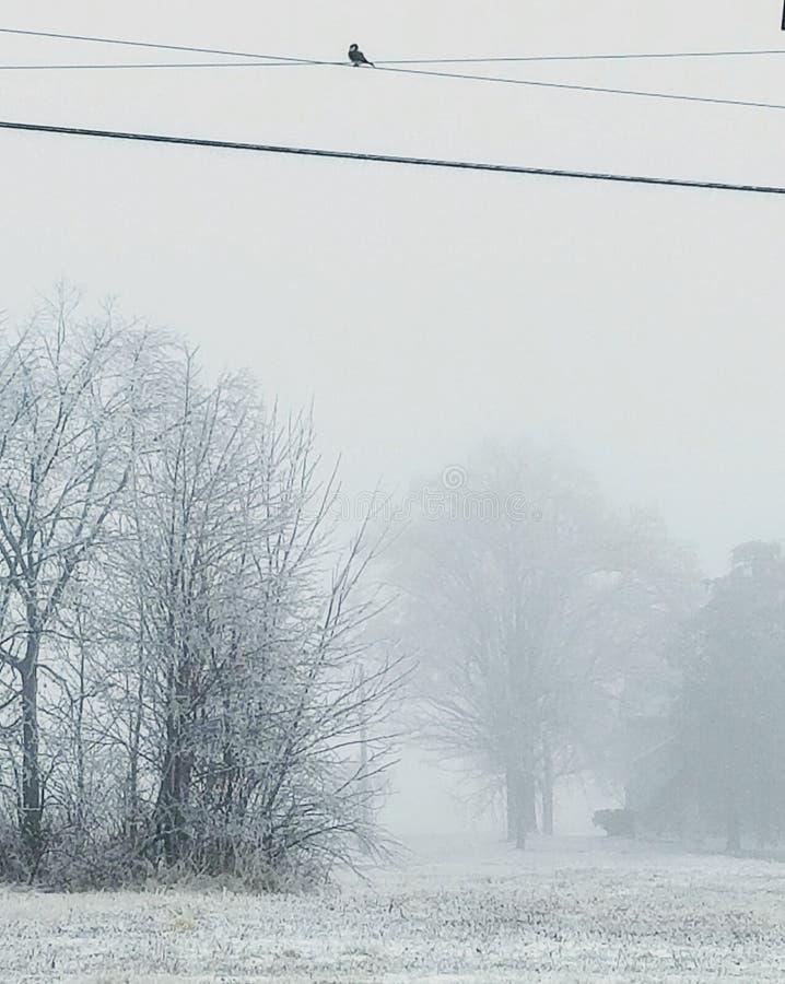 Calma nel icyness fotografie stock libere da diritti
