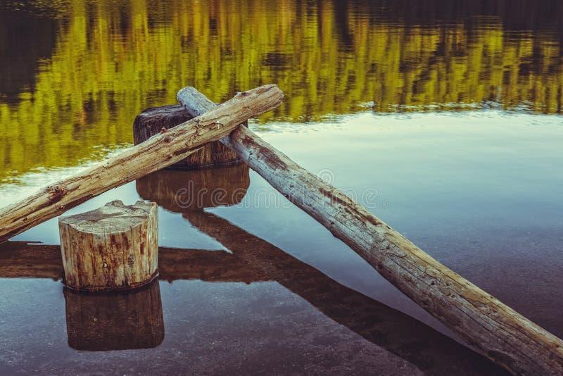 Calma, tronchi di albero nudi caduti nell'acqua fotografia stock