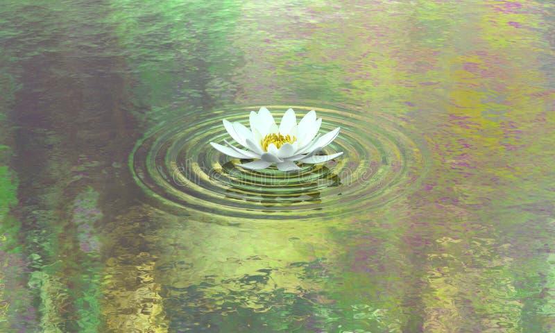Calma y pureza de la charca del lirio de agua imagen de archivo libre de regalías