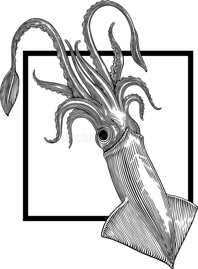 Calmar illustration stock