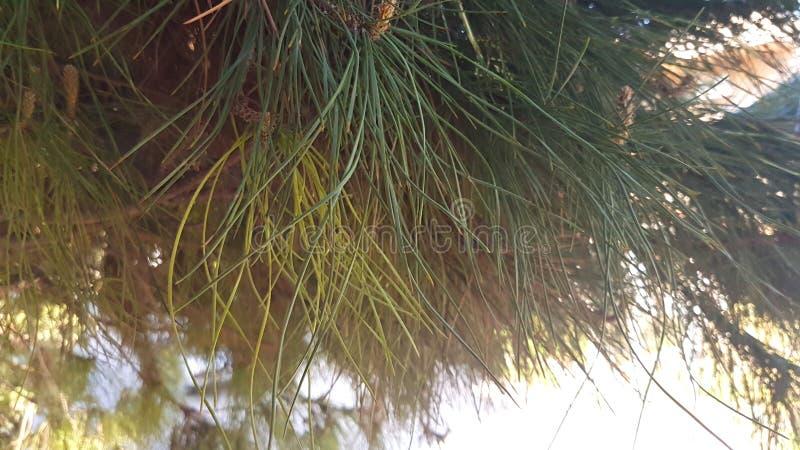 Calme vert de la vie de smoth de nature images libres de droits