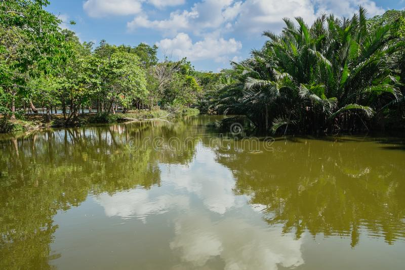 Creek flowing through palm grove with reflection of clouds and sky in the water. Calmly creek flowing through lush green Nipa palm grove with reflection of stock images