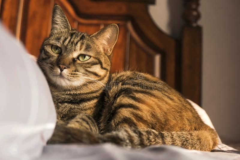 A calmness of the cat stock photo