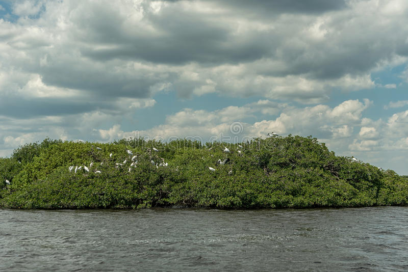 Caloosahatchee-Fluss in Fort Myers und in den Pelikan-Vögeln auf Baum lizenzfreie stockfotografie