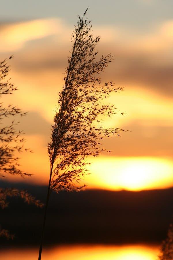 Calor ardiente del sol fotos de archivo