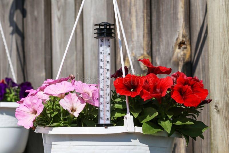 Calor do verão - um termometer mostra altas temperaturas fotografia de stock