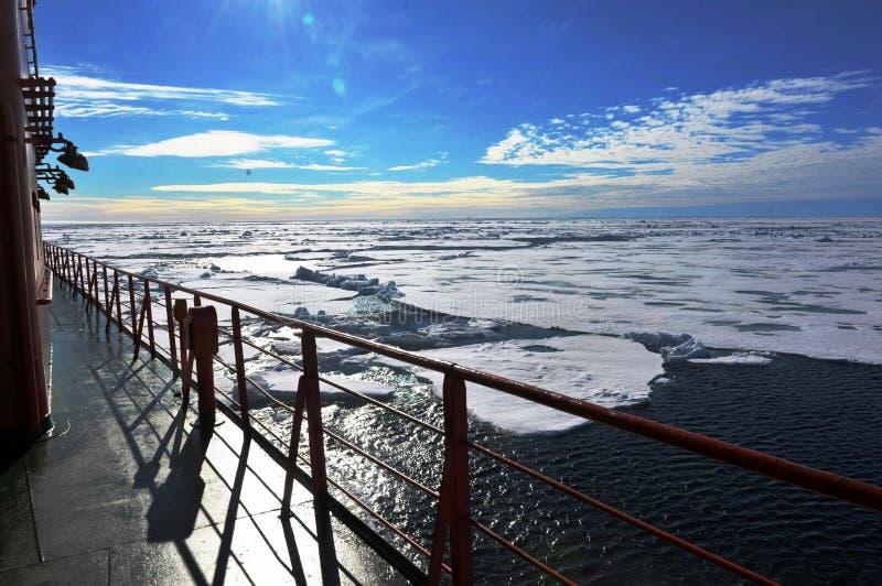 Calotes polares polares fotografia de stock
