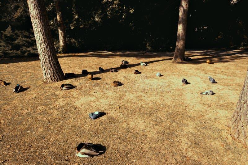 Calouste Gulbenkian podstawa zdjęcie stock