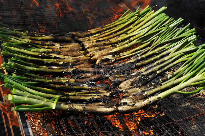 Download Calsots, Catalan Sweet Onions Stock Photo - Image: 19703512
