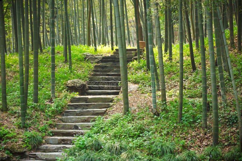 Calzada con las escaleras en bosque de bambú verde imagenes de archivo