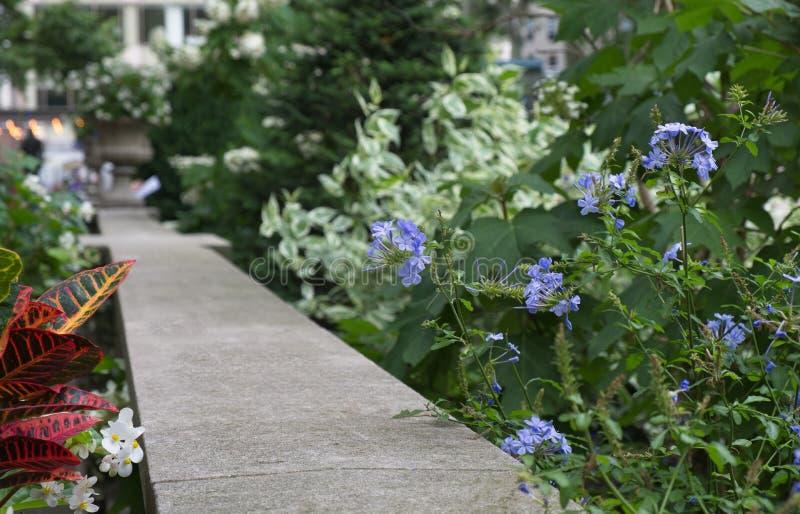 Calzada con las flores y las plantas que se descoloran en la distancia imagen de archivo libre de regalías