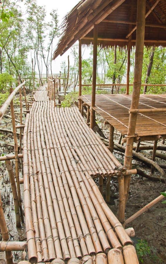 Calzada de bambú con el abrigo en bosque del mangle foto de archivo libre de regalías