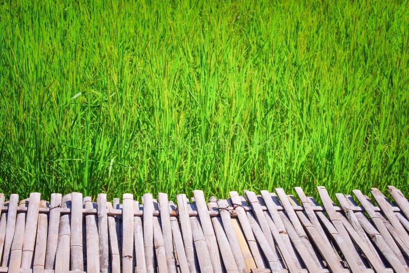 Calzada de bambú y campo grande del arroz, fondo de la naturaleza foto de archivo libre de regalías