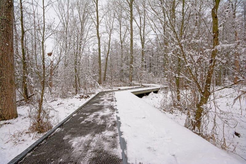 Calzada de madera en el bosque del invierno con los árboles y los arbustos cubiertos en nieve foto de archivo
