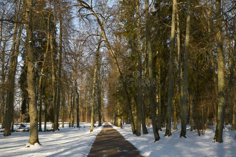 Calzada del asfalto en el parque en invierno foto de archivo libre de regalías