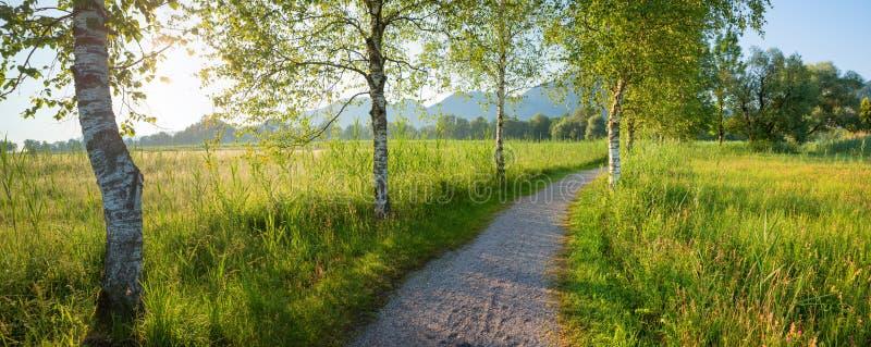 Calzada idílica entre los árboles de abedul, del schlehdorf al kochelsee del lago fotos de archivo libres de regalías