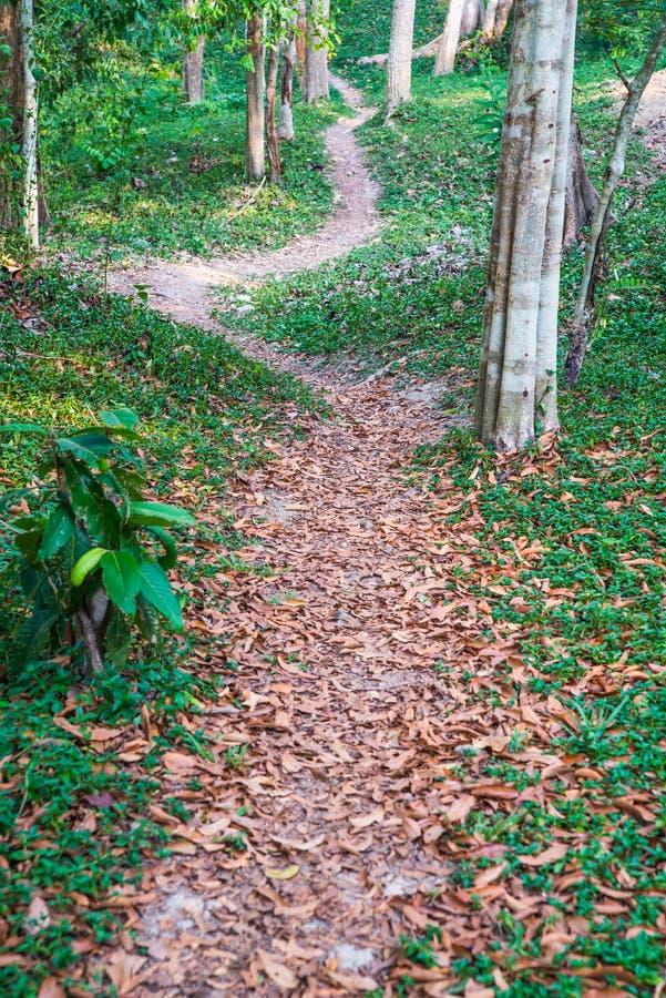 Calzada natural en el parque imagenes de archivo