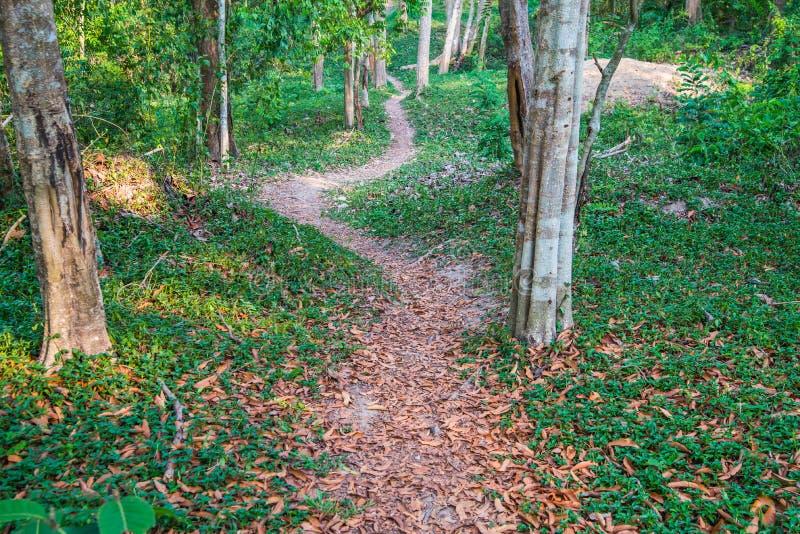 Calzada natural en el parque fotografía de archivo libre de regalías