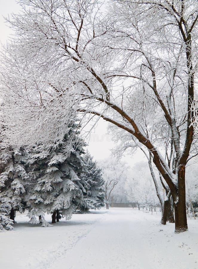 Calzada sitiada por la nieve del parque de la ciudad fotografía de archivo libre de regalías