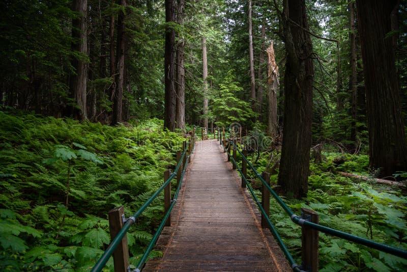 Calzada a través de un bosque denso foto de archivo libre de regalías