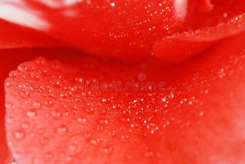 Camélia abstrait photos stock