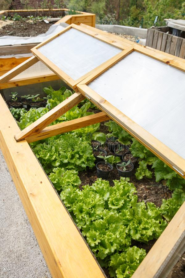 Cama aumentada invernadero hecho en casa del jardín fotos de archivo libres de regalías