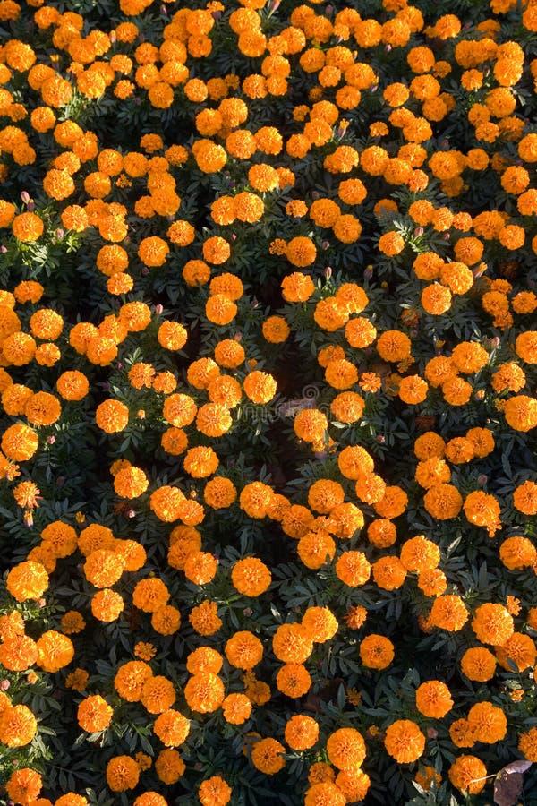 Cama de flor foto de archivo