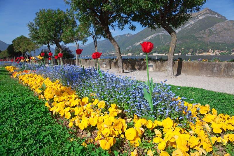 Cama de flor fotos de archivo libres de regalías
