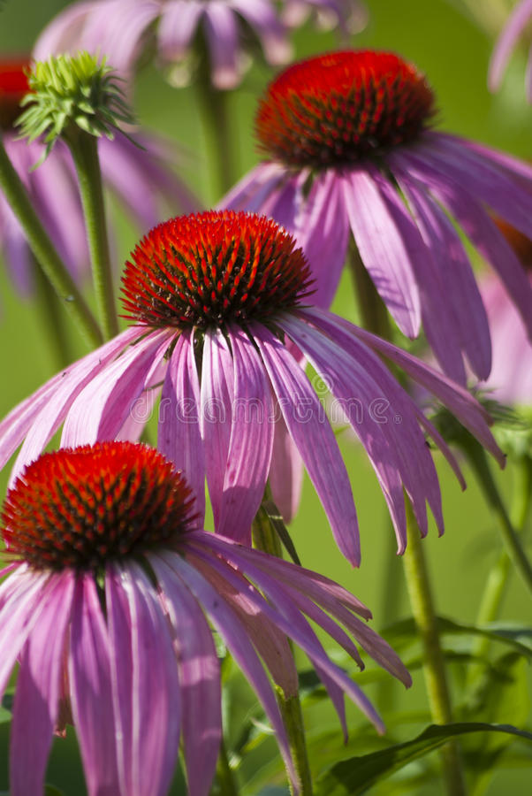 Cama de flor foto de archivo libre de regalías