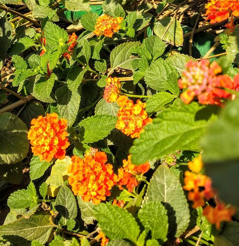 Cama de flor alaranjada imagens de stock