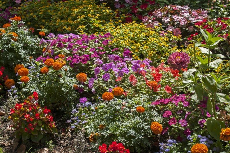Cama de flor colorida foto de stock