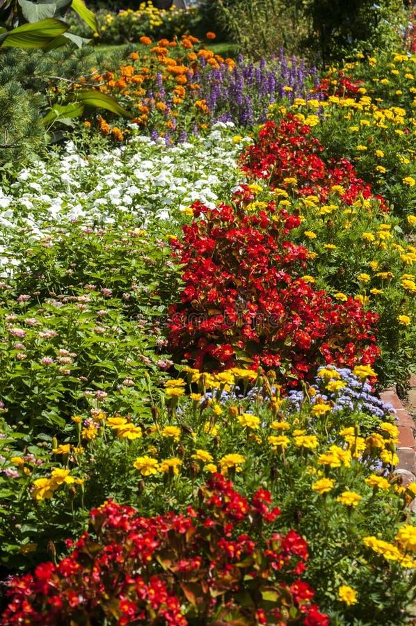 Cama de flor colorida fotos de stock royalty free