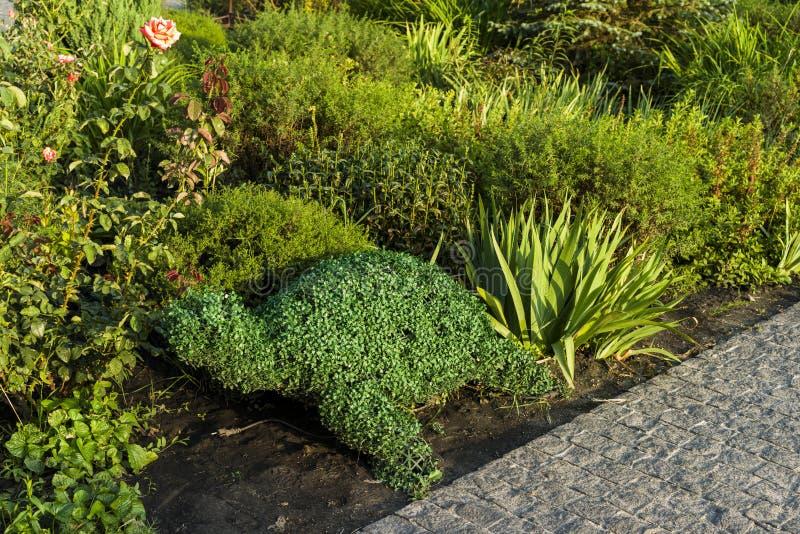 Cama de flor com um verde aparado foto de stock