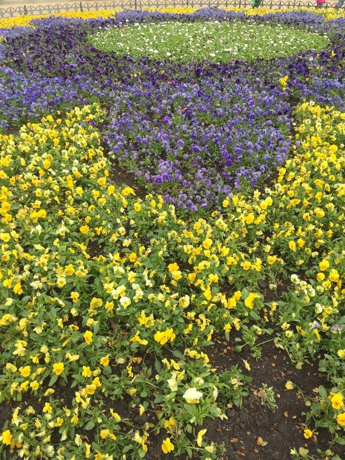 cama de flor con las flores amarillas y azules imágenes de archivo libres de regalías