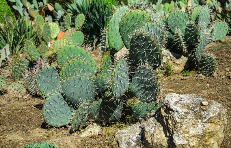 Cama de flor con los cactus imagen de archivo