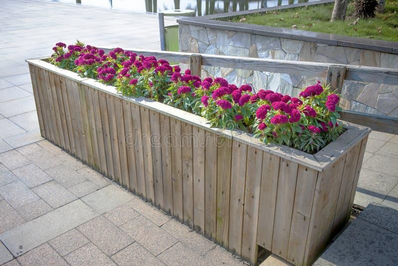Cama de flor de madeira imagem de stock royalty free